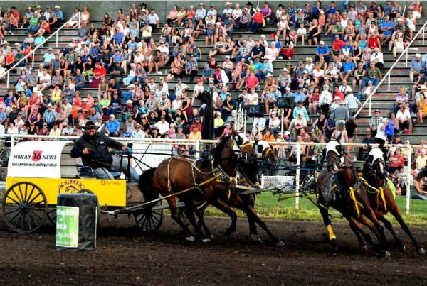 Chuckwagons Alberta